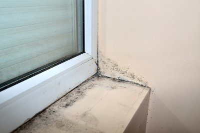 How mold can effect your health